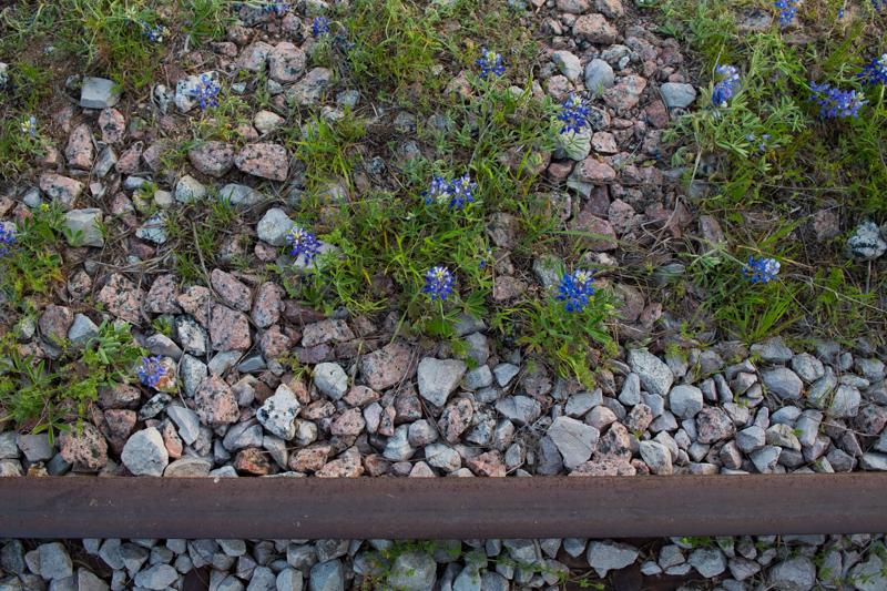 Annvie's - bluebonnets